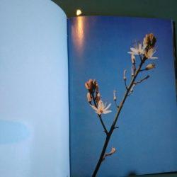 Flores silvestres - Aroeira Portugal -