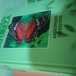 Atrópodes terrestres -